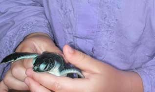 Sauver les tortues de mer
