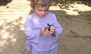 Adopter une tortue de mer
